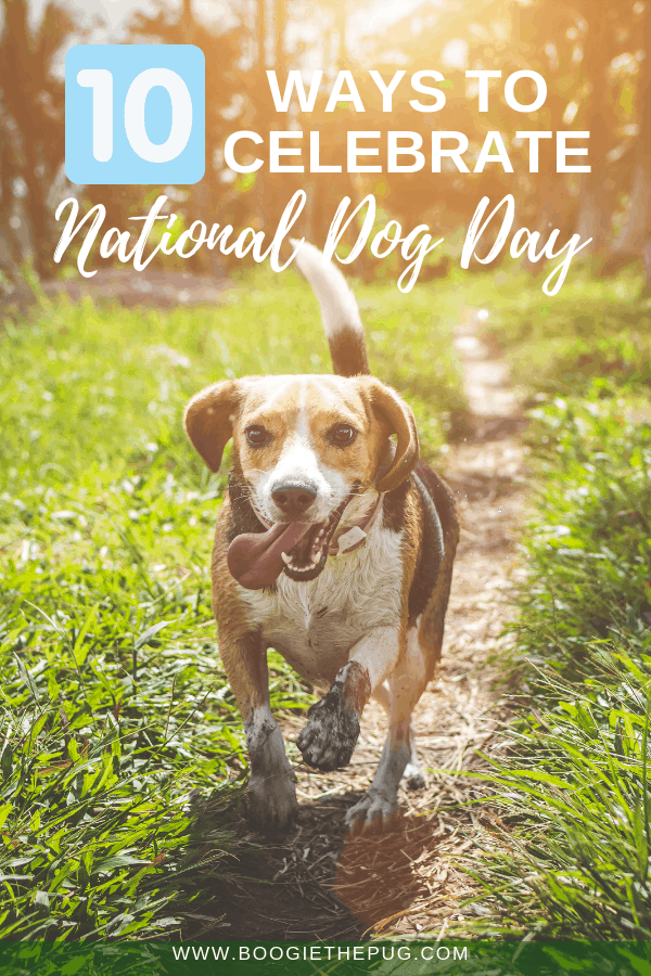 National Dog Day is August 26th! It's time to celebrate our furry friends. Here are 10 ways to celebrate National Dog Day.