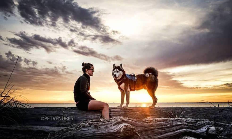 Tron the Husky and his owner at dusk.
