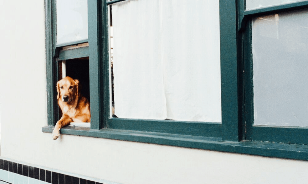 If you're planning a trip with your dog and using Airbnb, use these tips to book the perfect spot. There's more to it than clicking the pets allowed box.