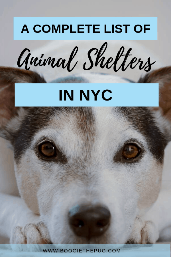Want to adopt a dog in NYC? Skip the pet store and head to one of these animal shelters in NYC.Here's where to adopt a dog near you in New York City.