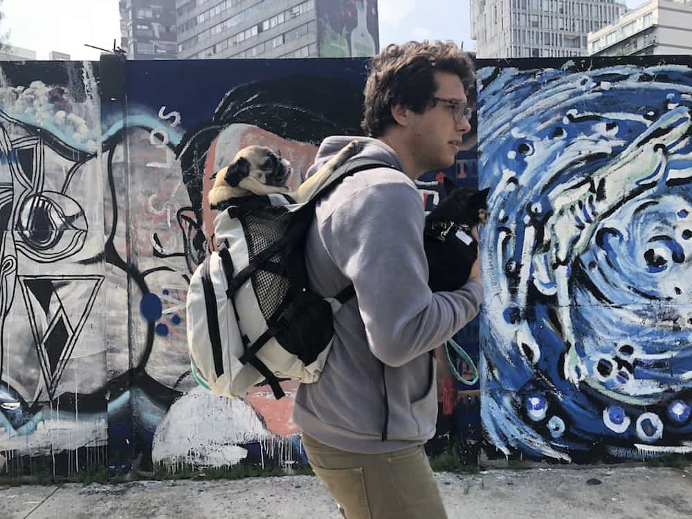 We tested two different models of the K9 Sport Sack dog backpack. Here's our honest review, as well as a discount code so you can get one too!
