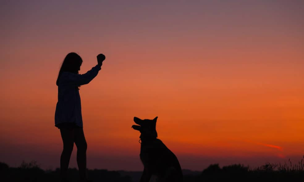 Whether you're staying in a hotel or camping, it's important for your dog to put their best paw forward. Here's a list of commands that are helpful while traveling.