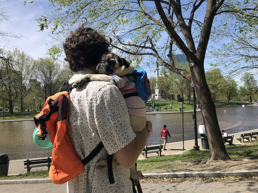 If you're bringing your dog to Boston, you have tons of fun in store. Check out these 15 dog-friendly things to do in Boston.