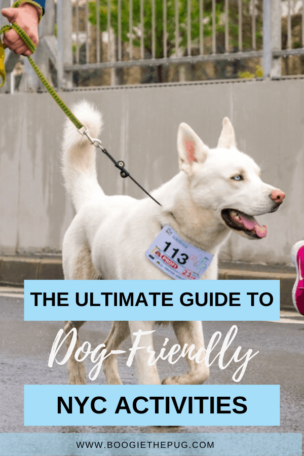 Do you have a dog in New York City? These New York City activities are all dog-friendly, so grab your pup and head outside.