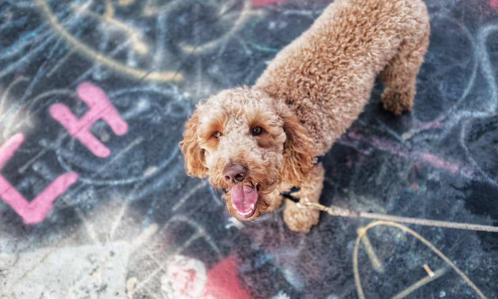 If you're looking for fun things to do with your dog in Brooklyn, head to one of these official dog parks.