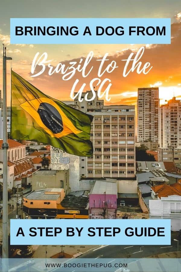 If you're traveling from Brazil to the USA with a dog or cat, this guide is for you! See each required step to bring your pet to the USA.