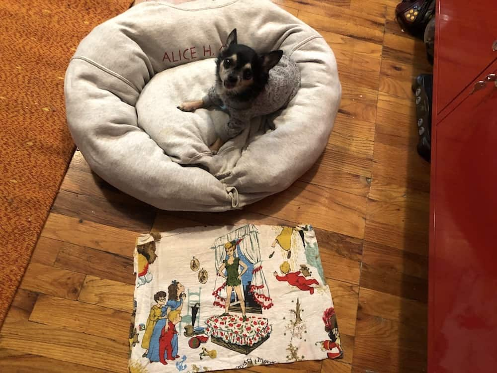 Making a DIY dog bed out of a sweatshirt.