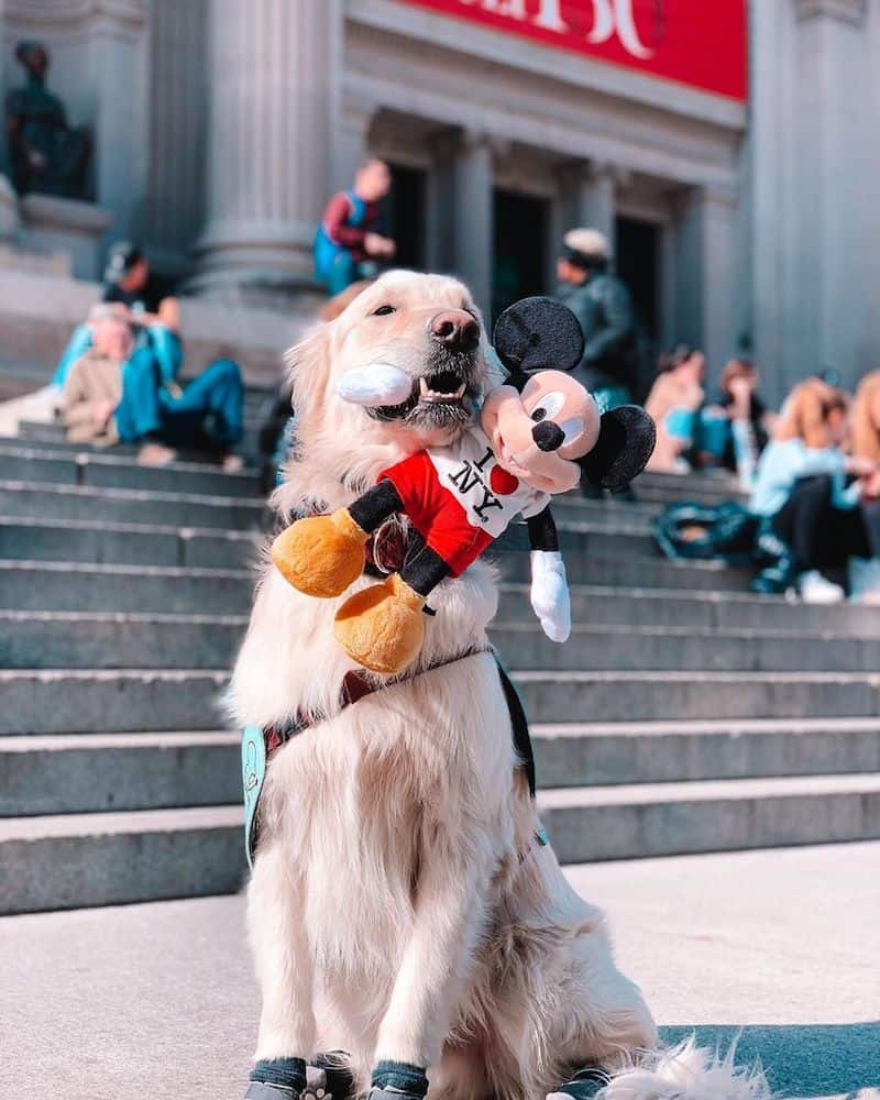 A dog in front of the Metropolitan Museum of Art.