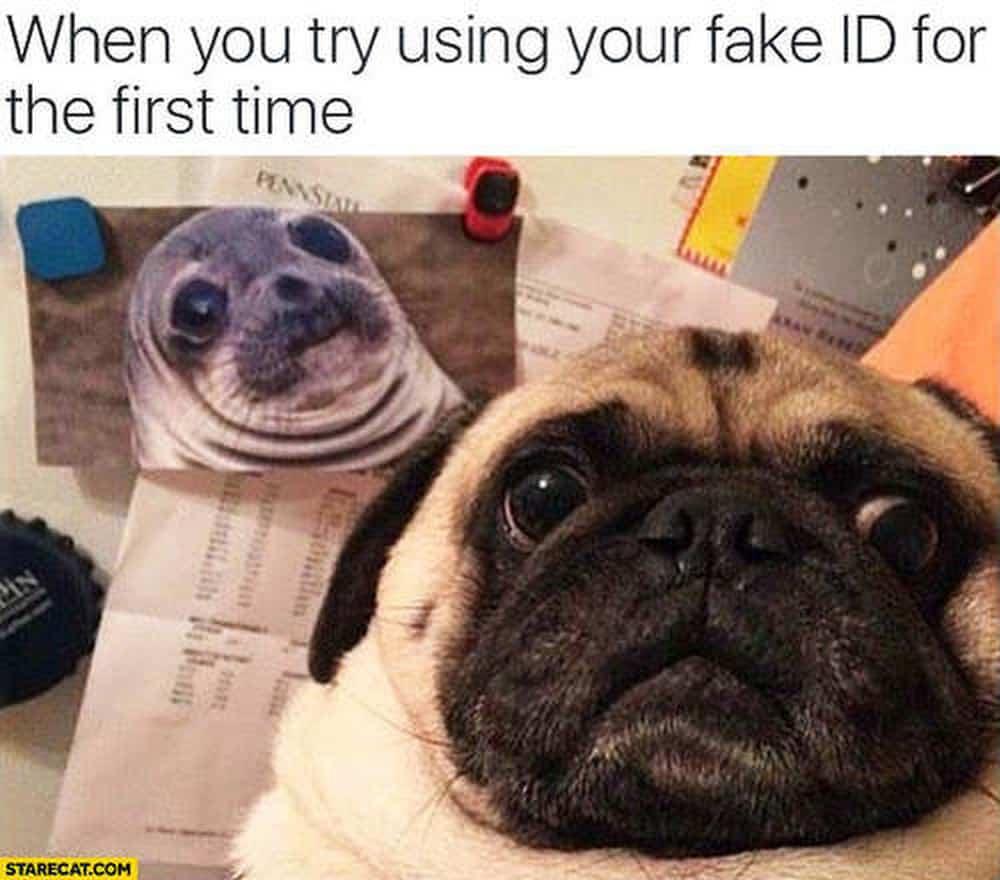 Pug Meme