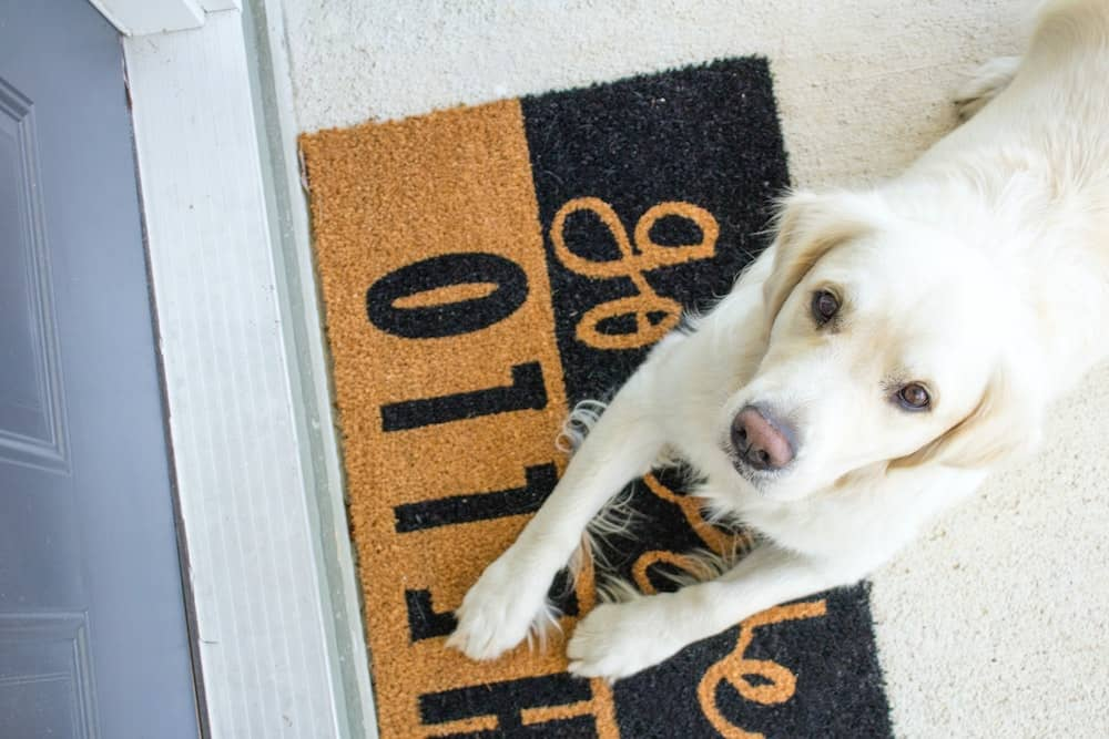 A dog laying on a welcome mat.
