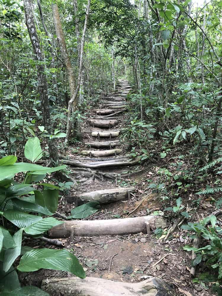 Stairs on the Dois Irmãos trail.